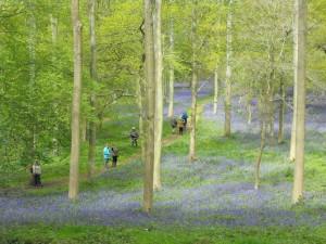 RABs spring walk photo